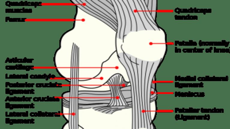 Anterior Cruciate Ligament Surgery